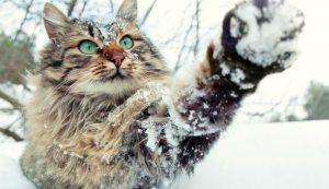 Γάτα βλέπει χιόνι για πρώτη φορά