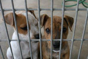 Έσφαζαν σκυλιά για να τα φάνε στο Μενίδι