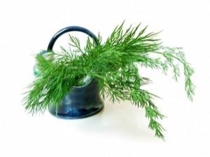 Τα βότανα στη ζωή μας - Άνηθος