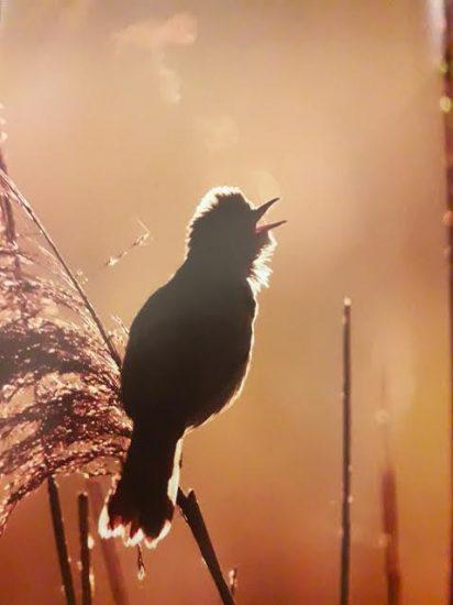 10 από τις πιο όμορφες φωτογραφίες ζώων