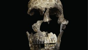 Homo naledi - Εντυπωσιακή ανακάλυψη στη Νότια Αφρική